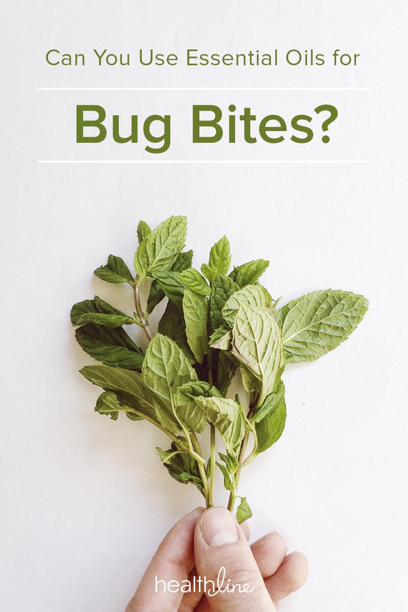 Essential Oils for Bug Bites: 7 Oils for Relief