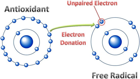 Antioxidants vs Free Radicals Diagram