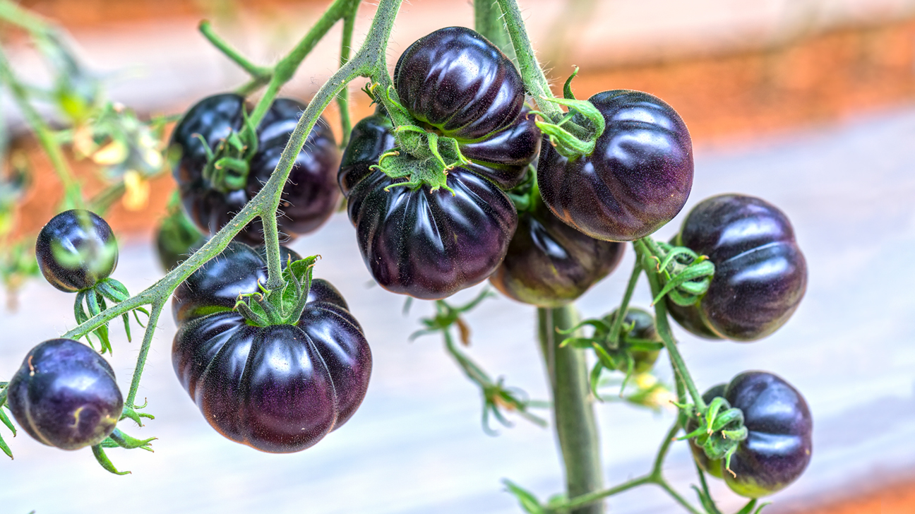 7 Delicious Blue Fruits With Powerful Health Benefits