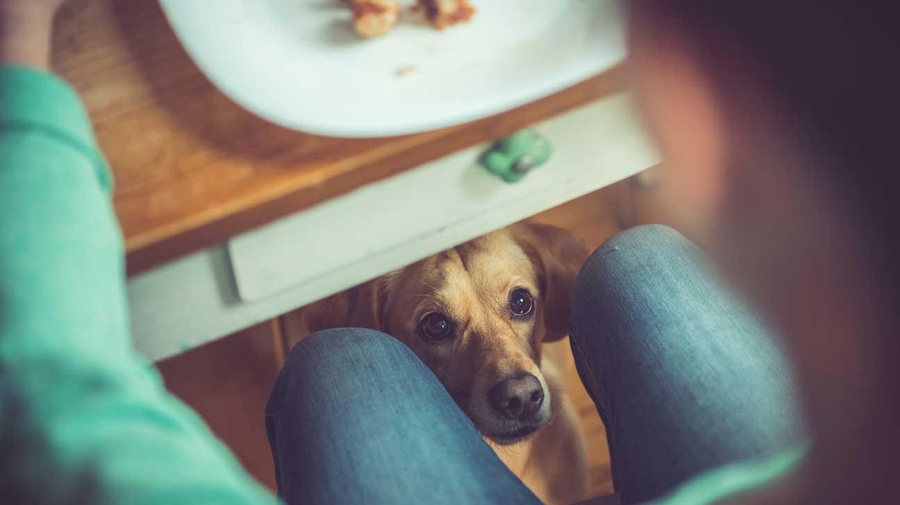 Feeding My Dog Human Food