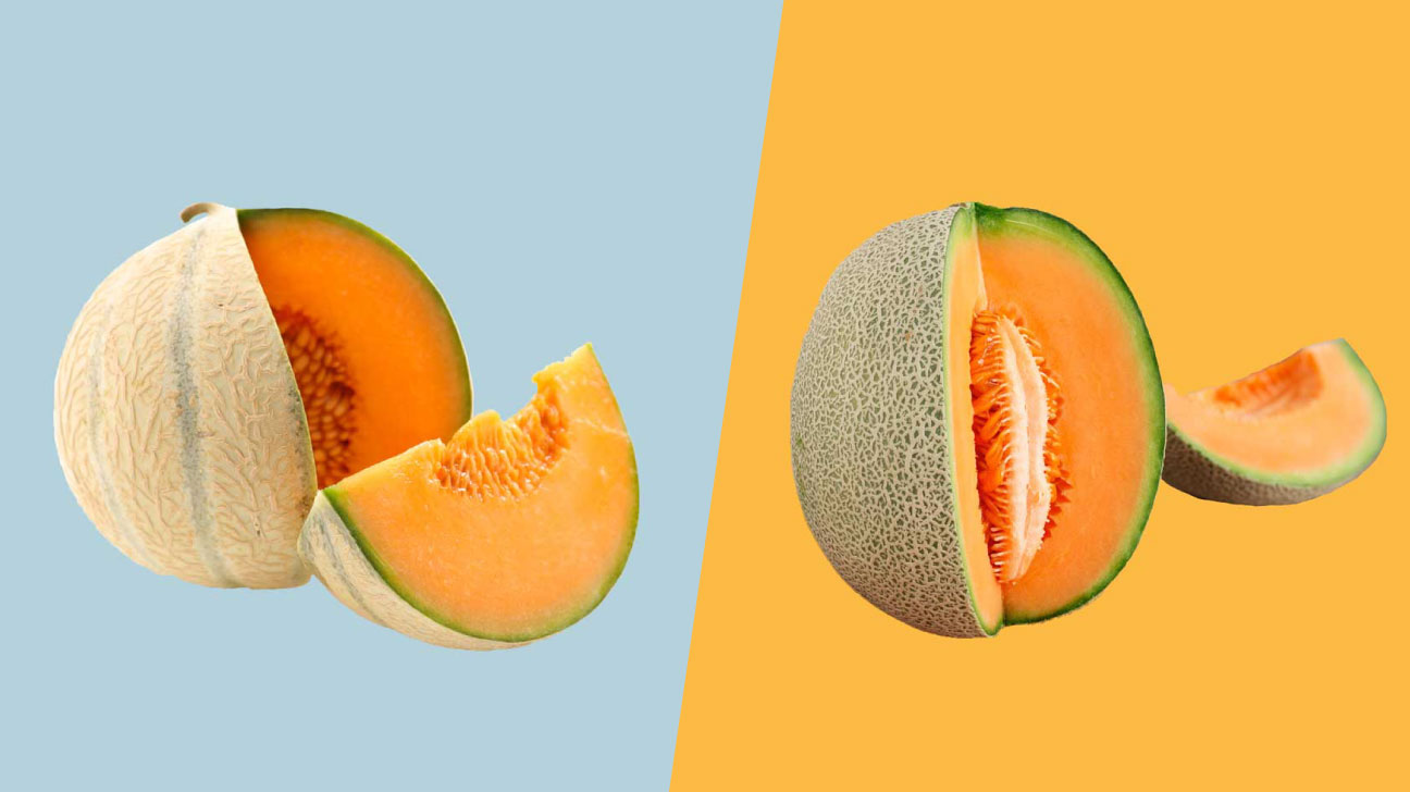 Muskmelon Vs Cantaloupe What S The Difference Cantaloupes are high in certain nutrients and vitamins in. muskmelon vs cantaloupe what s the