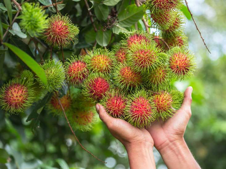 Durian Fruit: Smelly but Incredibly Nutritious