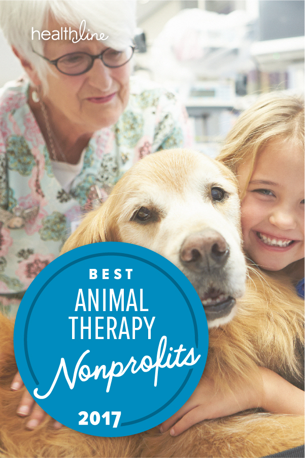 The Best Animal Therapy Nonprofits of 2017