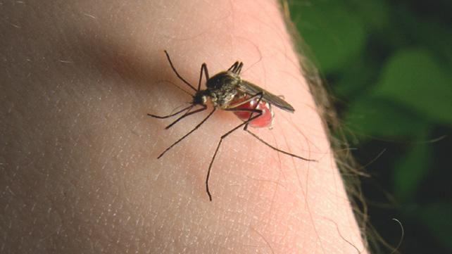 Ինչո՞ւ են մոծակները միշտ նույն մարդկանց խայթում