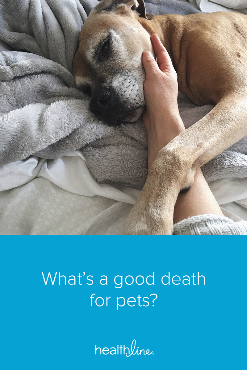How to Handle Your Pet's Final Days with Care