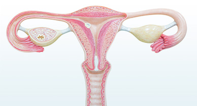 Does a Uterus Really Double in Size During Menstruation?