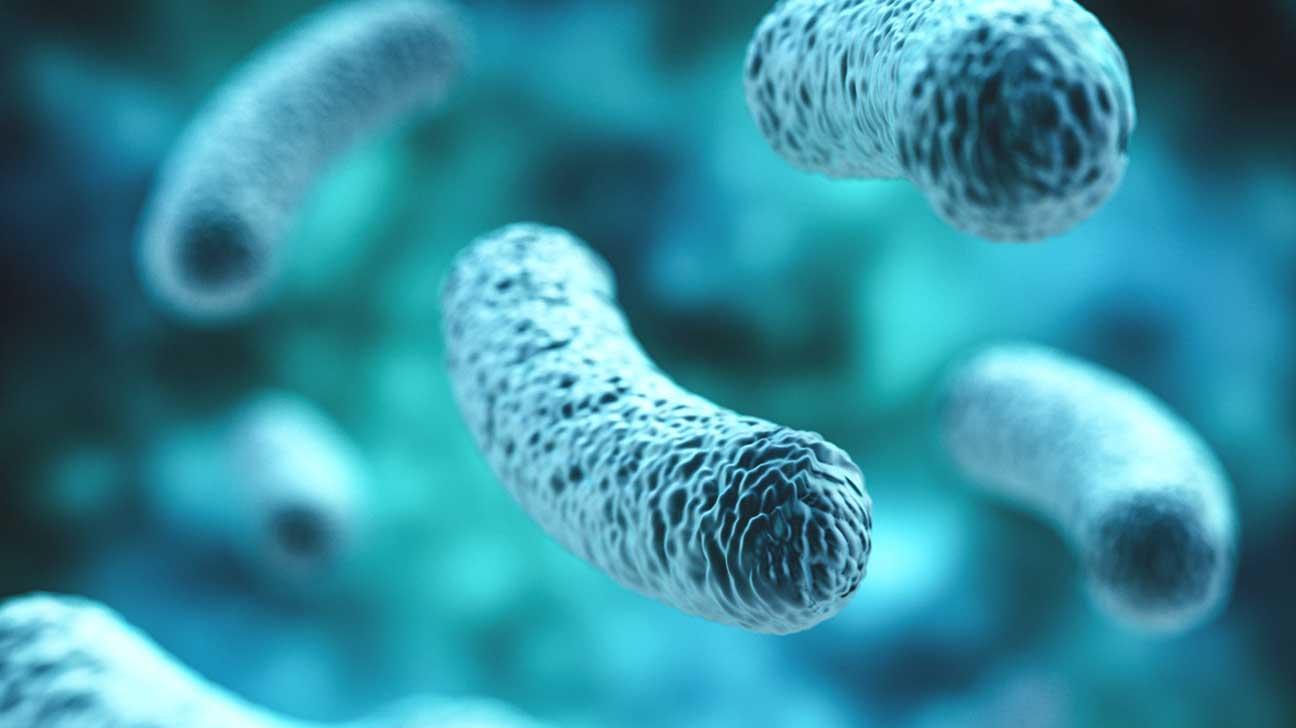 Autoimmune Diseases And Gut Flora