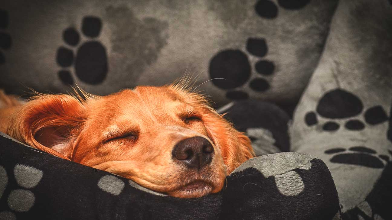 Should You Let Your Dog Sleep with You at Night?