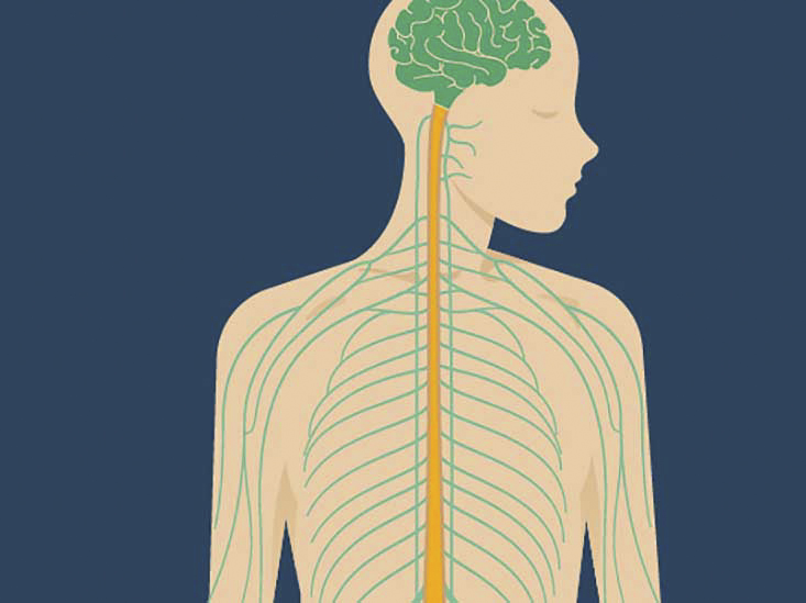 Vagus Nerve: Anatomy and Function, Diagram, Stimulation, Conditions