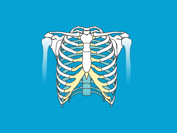Pectoral Girdle (Shoulder Girdle) Anatomy and Function
