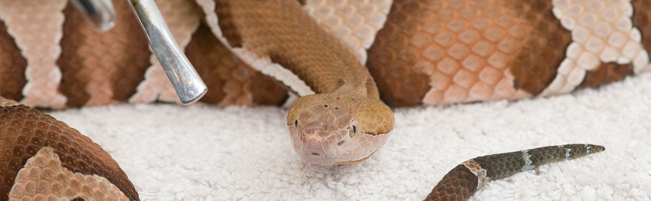 Snake Bites: Types, Symptoms, and Treatments