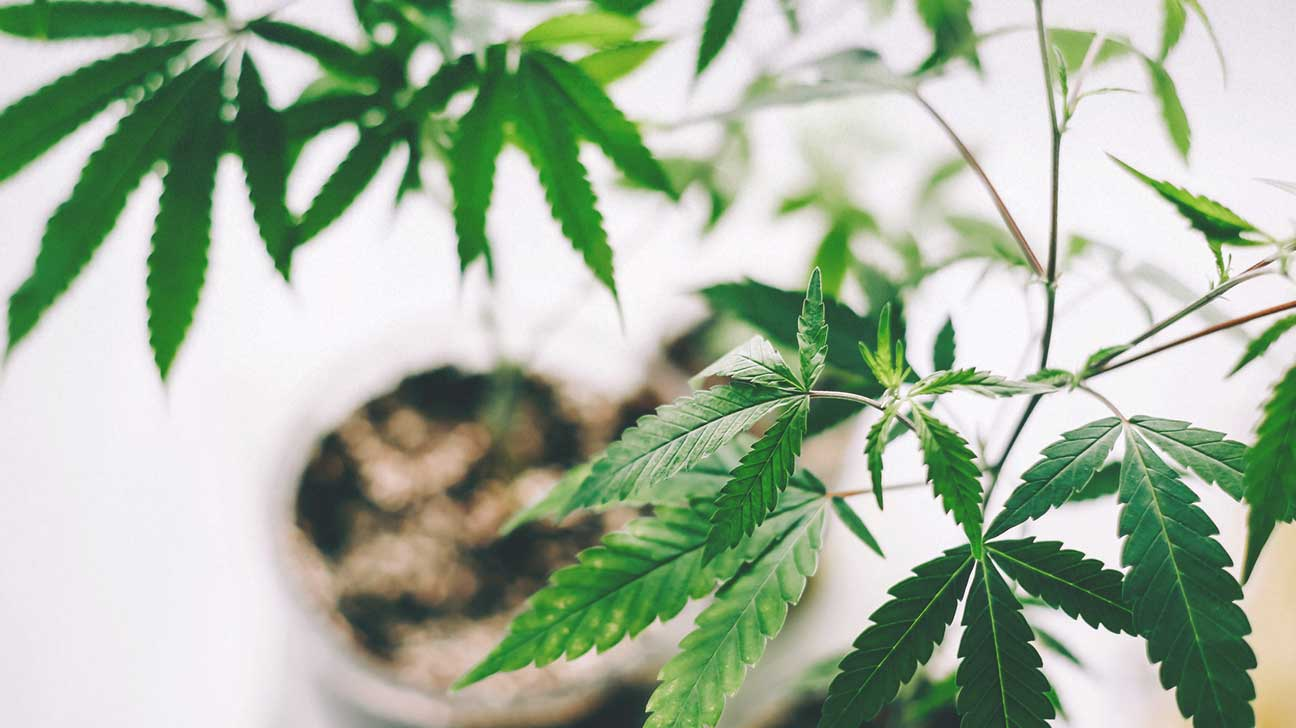 Cbd oil benefits cancer pain anxiety and more cannabidiol cbd oil is a product thats derived from cannabis its a type of cannabinoid which are the chemicals naturally found in marijuana plants mightylinksfo