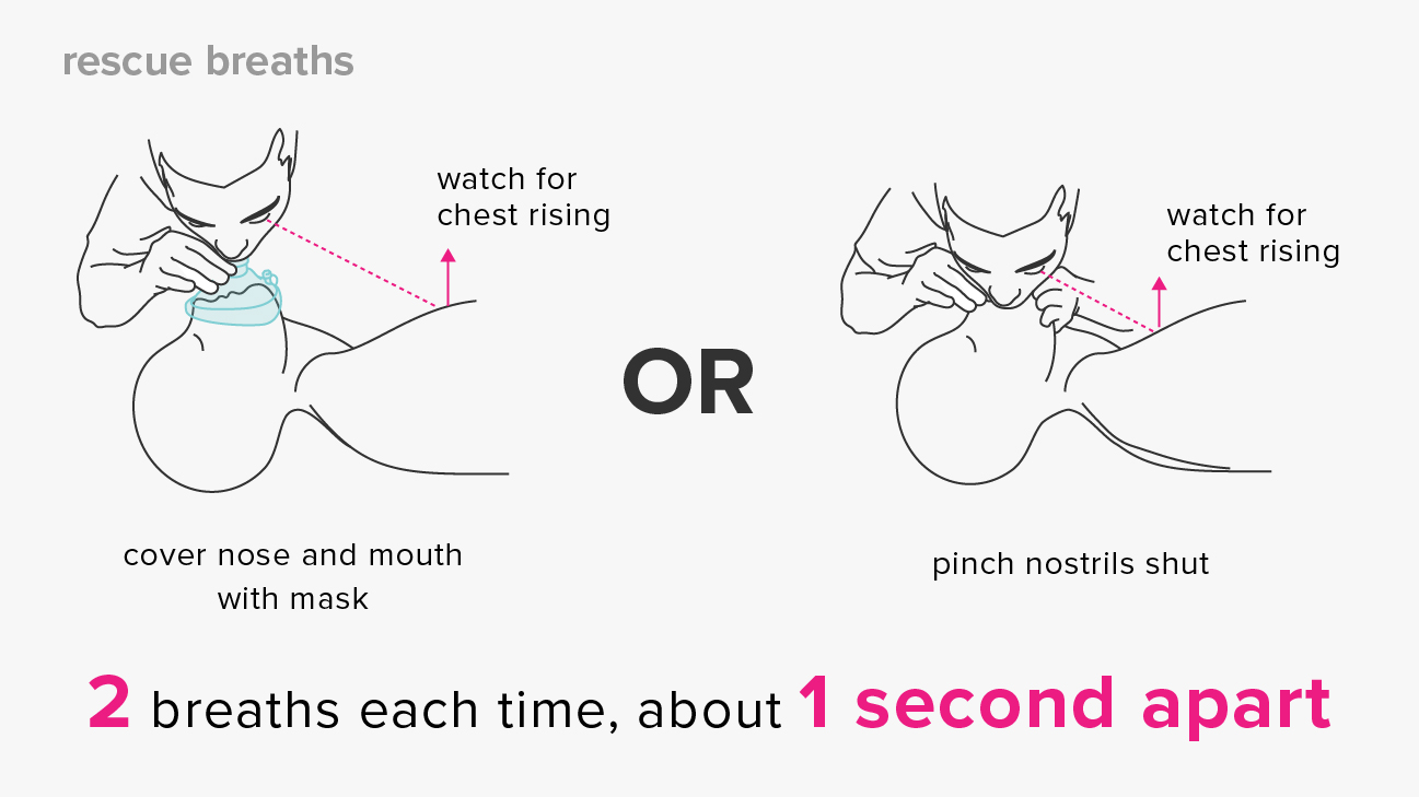 How To Perform Cpr Hands Only And Mouth To Mouth