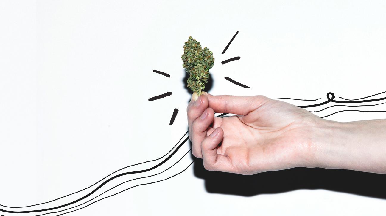 Beginner's Guide to Marijuana Strains