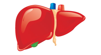 Liver Fibrosis: Stages, Treatment, and Symptoms