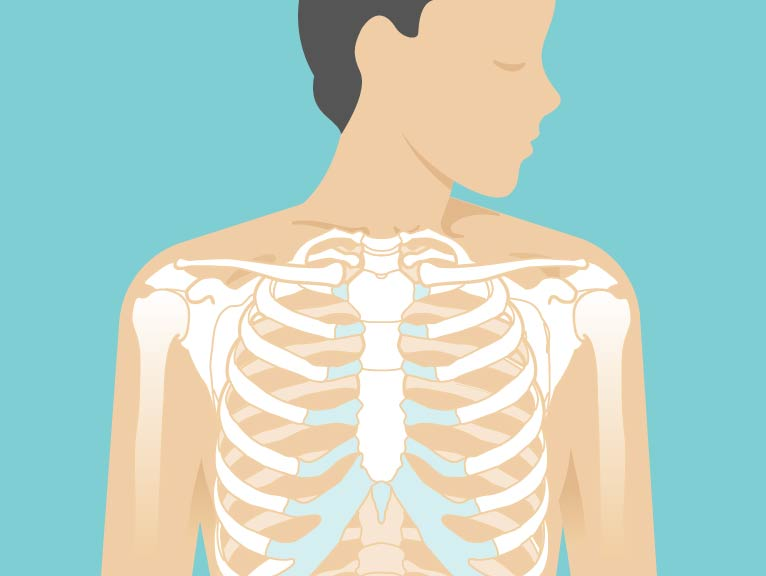 Sternum Area Anatomy Pictures Body Maps