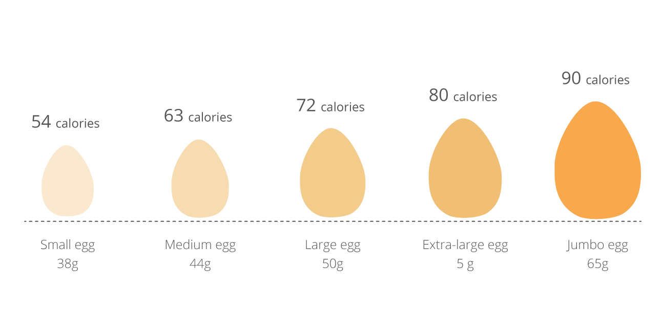 how much is the mass of an egg To understand how we got here, let's do some time traveling back in the 1920s, chicken egg farmers were pretty small-scale operations even the big guys only had about 400, maybe 500, hens, and.