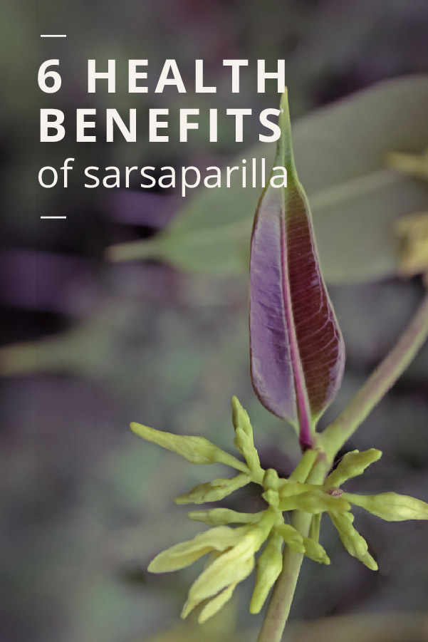Sarsaparilla: The Benefits, Risks, and Side Effects