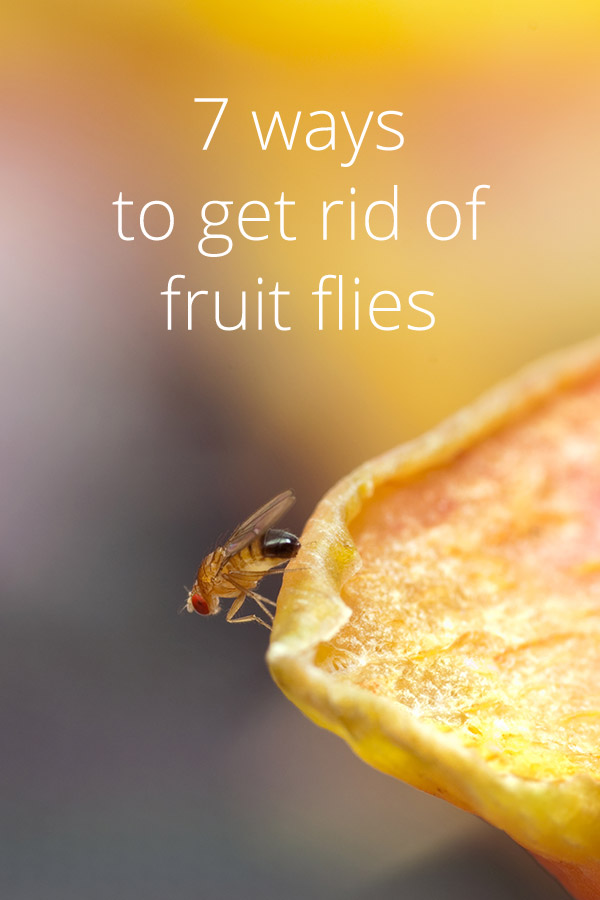 How To Get Rid Of Fruit Flies 7 Tips