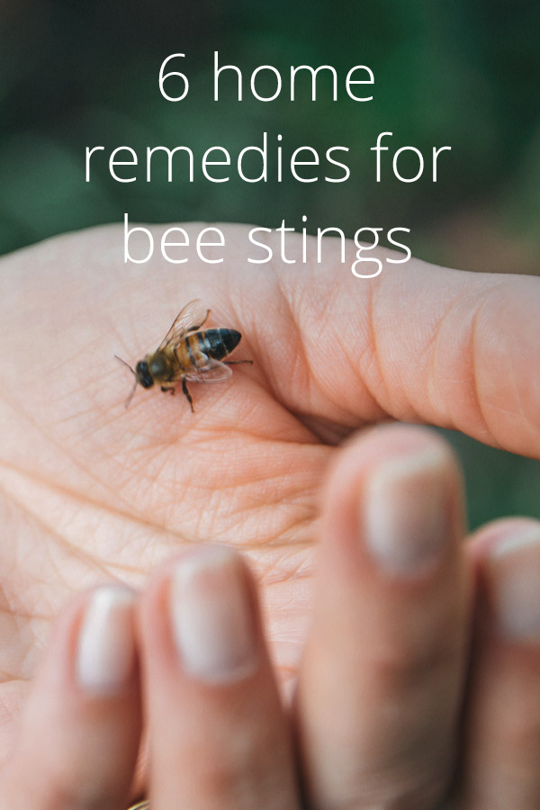 Enjoyable 6 Home Remedies For Bee Stings Interior Design Ideas Tzicisoteloinfo