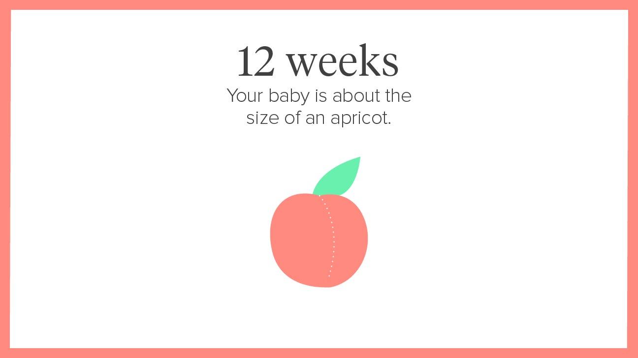Pregnancy Calendar A Week By Week Guide