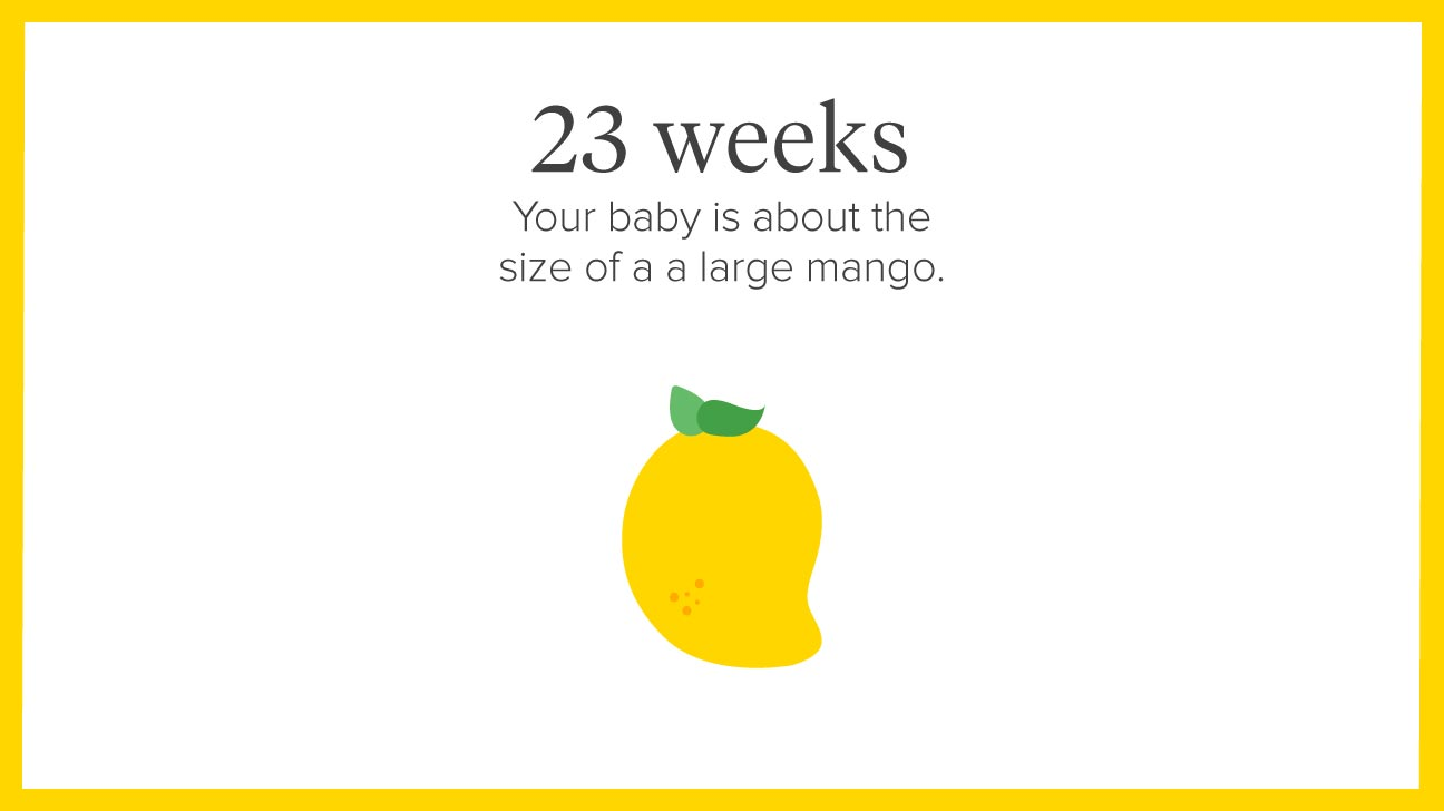 Average weight gain by 12 weeks pregnant
