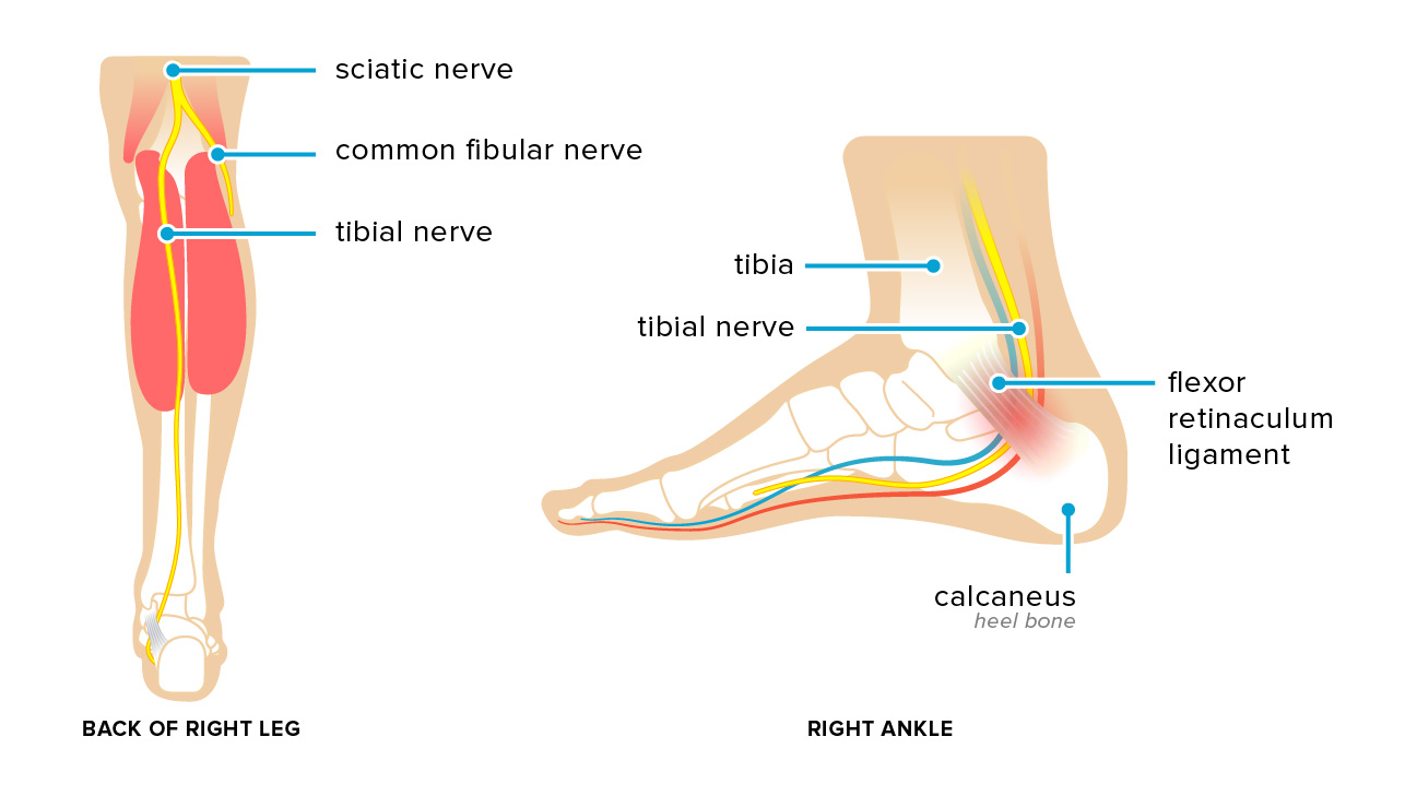 Inside Right Ankle Diagrams - Illustration Of Wiring Diagram •