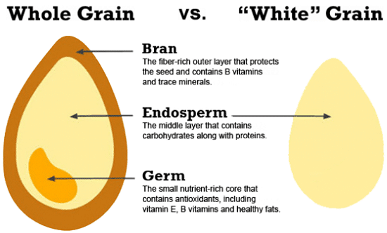 Nutritional facts of wheat kernel diagram diy enthusiasts wiring is rice fattening or weight loss friendly rh healthline com wheat plant diagram wheat seed anatomy ccuart Image collections